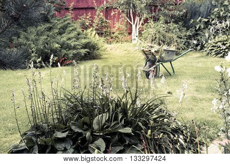 Summer gardening scene with lawn and hand cart on background