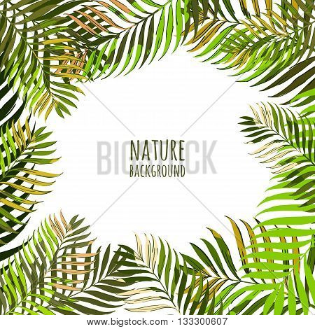 Vector Frame With Coconut Palm Leaves. Floral Summer Background With Tropical Green Leaves. Hand Dra