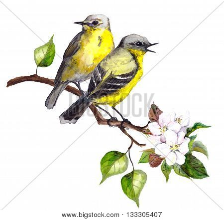 Two song birds on spring branch with leaves and flowers. Watercolor