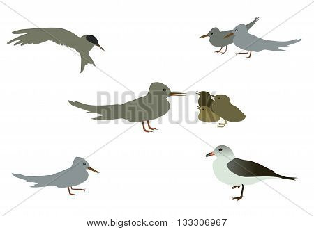 Set of Seabird seagull. Isolated on White background. Vector Illustration. EPS10