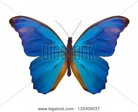 Blue Butterfly Isolated on White Realistic Vector Illustration EPS10