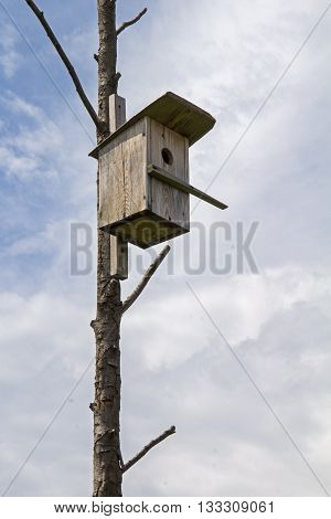 Wooden birdhouse on a dry tree. Russia.
