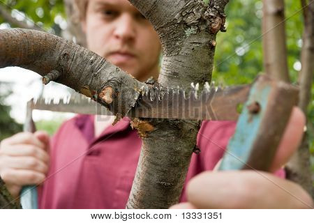 Cutting Tree Branch