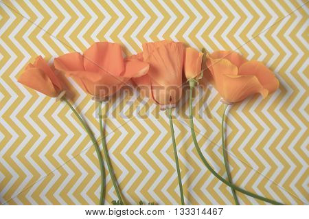 Caliornia poppies in a row on a yellow and white chevron surface