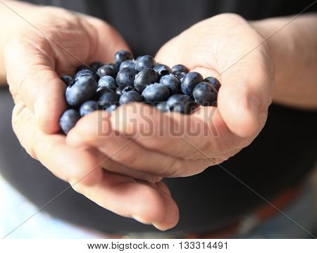 Older man with fresh blueberries in his hands
