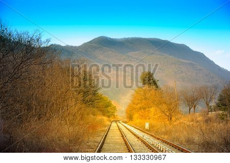 The route of the train that cuts through the forest and see the back of a mountain.