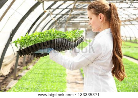 Female farmer working in large greenhouse