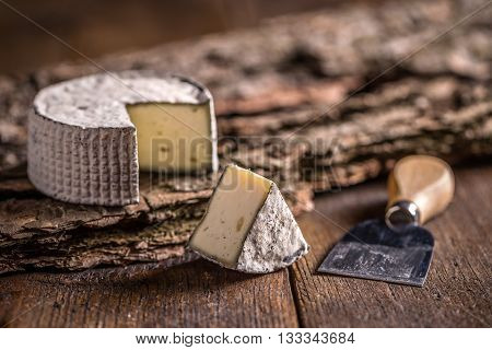 Camembert soft cheese on wooden background, studio shot