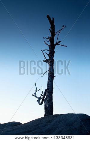 Old Death Tree Trunk On Rocky Peak. Blue Hour View