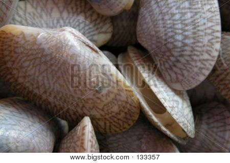 Edible Shell