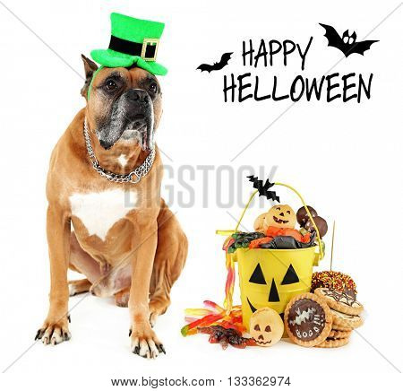 Cute dog wearing funny costume for Halloween, isolated on white