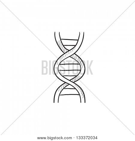 DNA vector sketch icon isolated on background. Hand drawn DNA icon. DNA sketch icon for infographic, website or app.