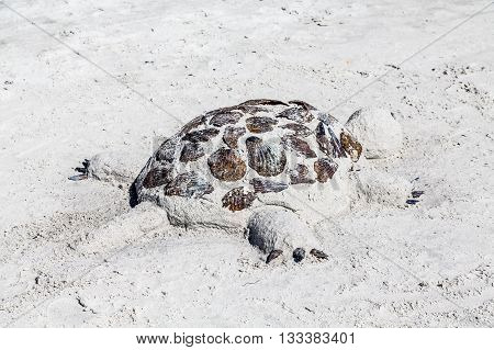 Sand Sculpture of a Turtle on a Beach in Flordia