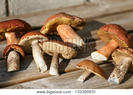 Wild mushrooms picked from a pristine forest