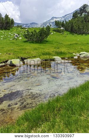 Amazing view of green hills and mountain river in Pirin Mountain, Bulgaria