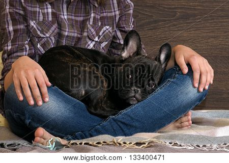 Dog on the teenager kneeling on the bed. Legs in jeans, barefoot. Black Dog, Puppy French buldoga.Idei, concepts - Dogs Trust to the person. Comfort, rest with the dog