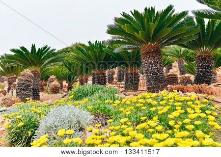 Flowers And Palm Trees In Botanical Garden. Botanicactus. Mallorca. Spain.