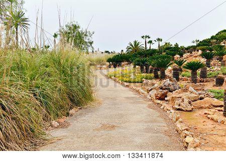 Walking Path In Botanical Garden. Botanicactus. Mallorca. Spain.