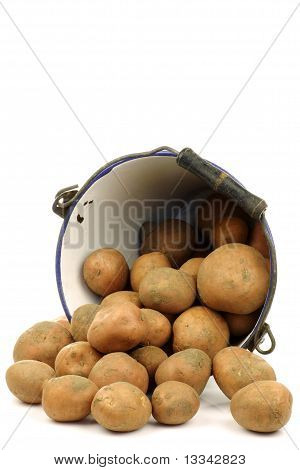 Bunch of potatoes coming out of an old enamel bucket