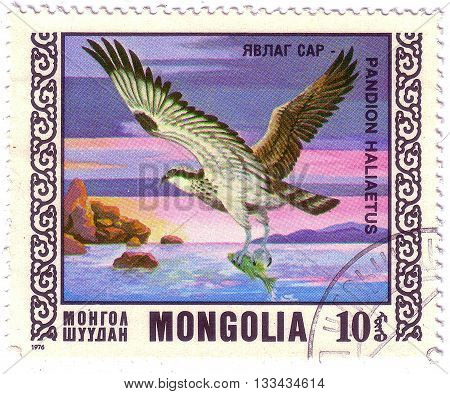 Mongolia - Circa 1976: Stamp Printed By Mongolia, Shows Bird, Osprey, Circa 1976