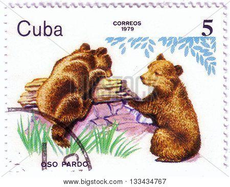 Cuba- Circa 1979: A Stamp Printed In Cuba, Shows Bear Cubs, Zoo Animals, Circa 1979