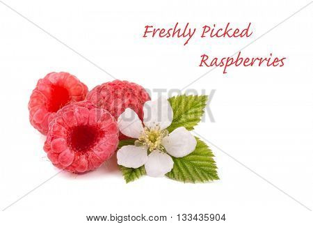 Raspberries, flower and leaves on white, with copy space