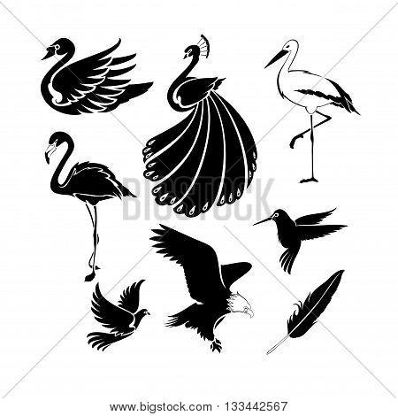 Big set of artistic vector birds. Clean simple good for logo design