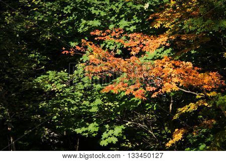 Colored Foliage On The Trees