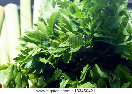 Fresh parsley leaves, collected in a bun