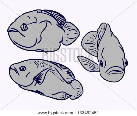 Contour aquarium fish on white background. The set of images in the form of three fish. Vector illustration - fish swims