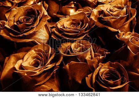 dark bronze roses close-up. festive bouquet. background.
