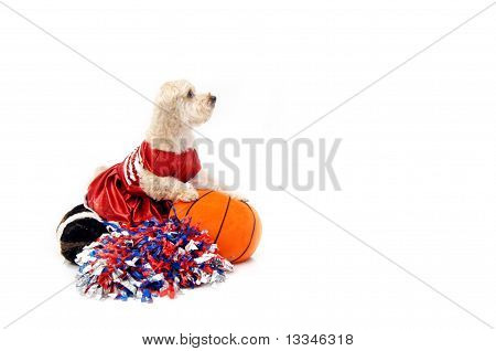 Basketball Silky Poo