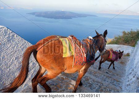 Donkeys going down the steps in Fira Santorini