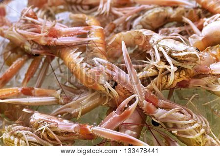 Close up of fresh scampi in a fish store