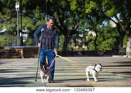Elderly man with crutch walking his dogs. Summer sunny.