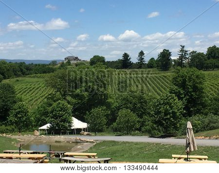 A spectacular view of the vineyards from Oak Barrel winery in Delaplane, Virginia.