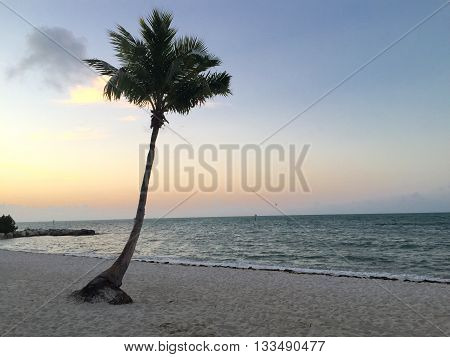 A lonely palm tree on a remote island.
