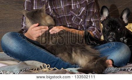 Legs in jeans, a dog and a cat. Cat on the human knees pressed against the dog's feet. Teenager sitting on the bed barefoot. Cozy, evening light. Hands stroking animals, hug