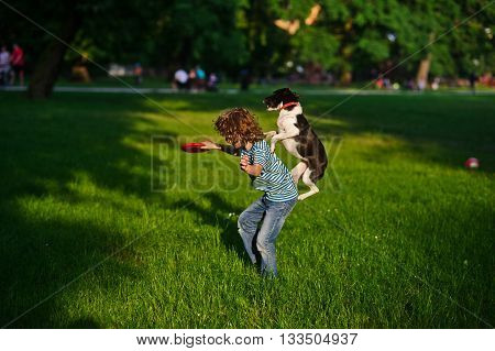 The boy trains a dog.In a summer garden the boy of 8-9 years plays with a dog.In a hand at the boy a disk.Highly jumped dog tries to grab with frisbee.