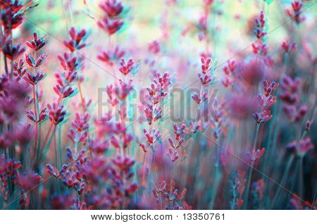 3D Anaglyph Ofa Lavender Plant Field