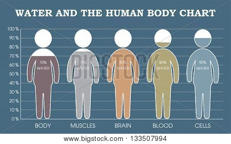 Water and the human body chart infographic