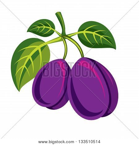 Two purple simple vector plums with green leaves ripe sweet fruits illustration.