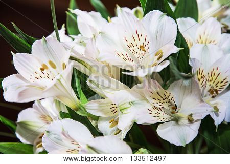 Festive bouquet of beautiful white hibiscus flowers. Big petals and pistil. Beauty in nature. Wedding bouquet. Natural decoration. Closeup scene. Hibiscus stigma.