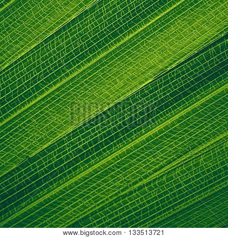 Abstract creative background of palm leaf pattern with filtered color. Closeup of leaves texture. Natural green background for design.