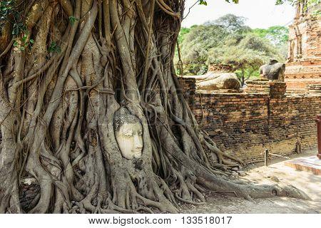 The head of Buddha in tree roots in Wat Mahatat Ayutthaya