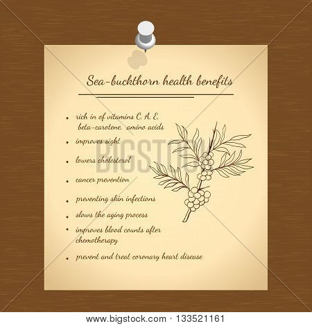 Illustration  hand drawn sea-buckthorn. Health benefits information. Medicinal plant.   Vector illustration