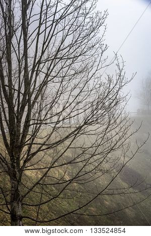 Calm Tranquil Nature Scenic of Bare Deciduous Tree on Hillside in Foggy Rural Countryside on Gloomy Overcast Day