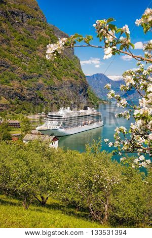 Cruise Ship Against Blossom Tree In The Port Of Flam, Norway