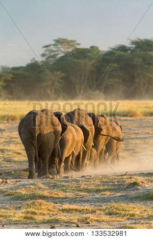 Group of elephants shot at the back in Amboseli Kenya. Vertical shot.