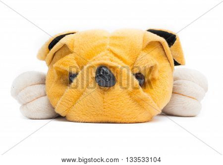 plush toy dog on white backgroundDog Plush toy for children.